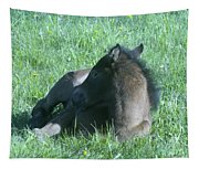 Napping Colt Tapestry