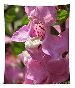 Nemesia Named Poetry Lavender Pink Tapestry
