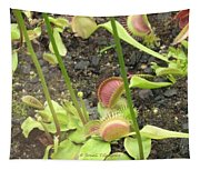 Nepenthes Tapestry
