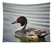 Northern Pintail Duck  Tapestry