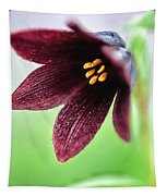 Northern Rice Root Fritillaria Tapestry