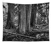 Old Growth Cedar Trees - Montana Tapestry