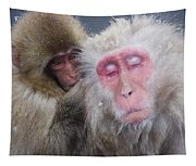 Older Snow Monkey Being Groomed By A Tapestry