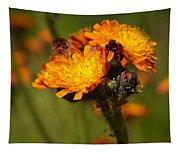 Orange Hawkweed Tapestry