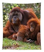 Orangutan Mother And Baby Tapestry