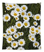 Ox-eyed Daisies, Banff National Park Tapestry