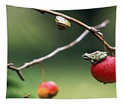 Pacific Tree Frog On A Crab Apple Tapestry