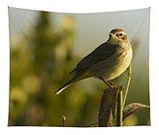 Palm Warbler, Everglades National Park Tapestry