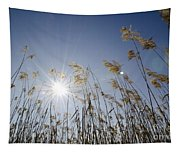 Pampas Grass Tapestry