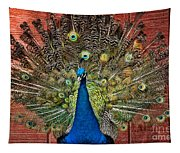 Peacock Tails Tapestry
