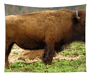 Pennsylvania Bison Tapestry