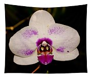 Phalaenopsis White Orchid Tapestry
