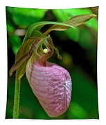 Pink Lady Slipper Orchid Dspf232 Tapestry