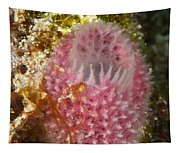 Pink Sponge Tapestry