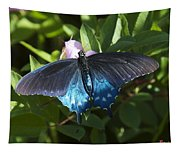 Pipevine Swallowtail Din003 Tapestry