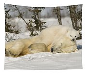 Polar Bear With Cub In Snow Tapestry