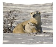 Polar Bear With Cub, Watchee Tapestry