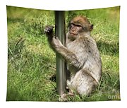 Pole Dancing Macaque Style Tapestry