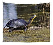 Pond Turtle Basking In The Sun Tapestry
