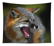 Portrait Of Gray Fox Barking Tapestry