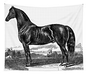 Prize Horse, 1857 Tapestry