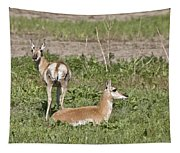 Pronghorn Antelope With Young Tapestry