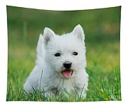 Puppy West Highland White Terrier Tapestry