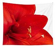 Red Amaryllis  Tapestry