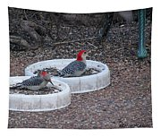 Red Bellied Woodpeckers Male And Female Tapestry