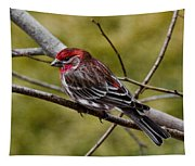 Red Head Black Tail Tapestry