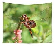 Red Saddlebag Dragonfly In The Marsh Tapestry