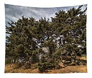 Red Spruce On Whitetop Mountain Tapestry