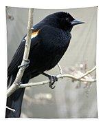Red-winged Blackbird Agelaius Tapestry