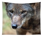 Red Wolf Closeup Tapestry