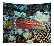 Ringtail Wrasse Tapestry