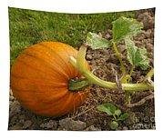 Ripe Pumpkin Tapestry