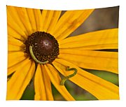 Roadside Daisy And Inch Worms Tapestry