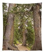 Rocky Mountain Forest Walk Tapestry
