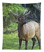 Roe Deer In Forest, Canadian Tapestry