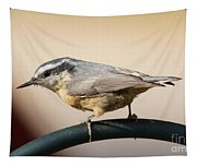 Rose Breasted Nuthatch Tapestry