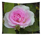 Rosy Tapestry