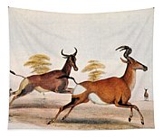 Sassaby And Hartebeest, Tapestry