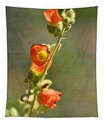 Scarlet Globe-mallow Tapestry