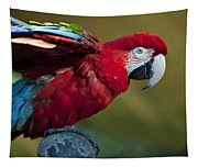 Scarlet Macaw Tapestry