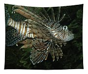 Scorpion Tapestry