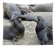 Seal Spa. Men's Talk2 Tapestry