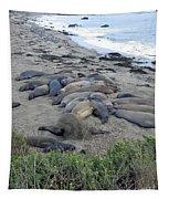 Seal Spa. Sand Bath Tapestry