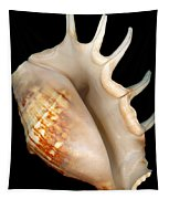 Shell - Conchology - Conch Tapestry