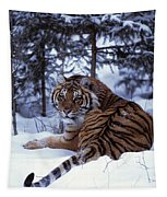 Siberian Tiger Lying On Mound Of Snow Tapestry