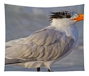 Siesta Key Royal Tern Tapestry